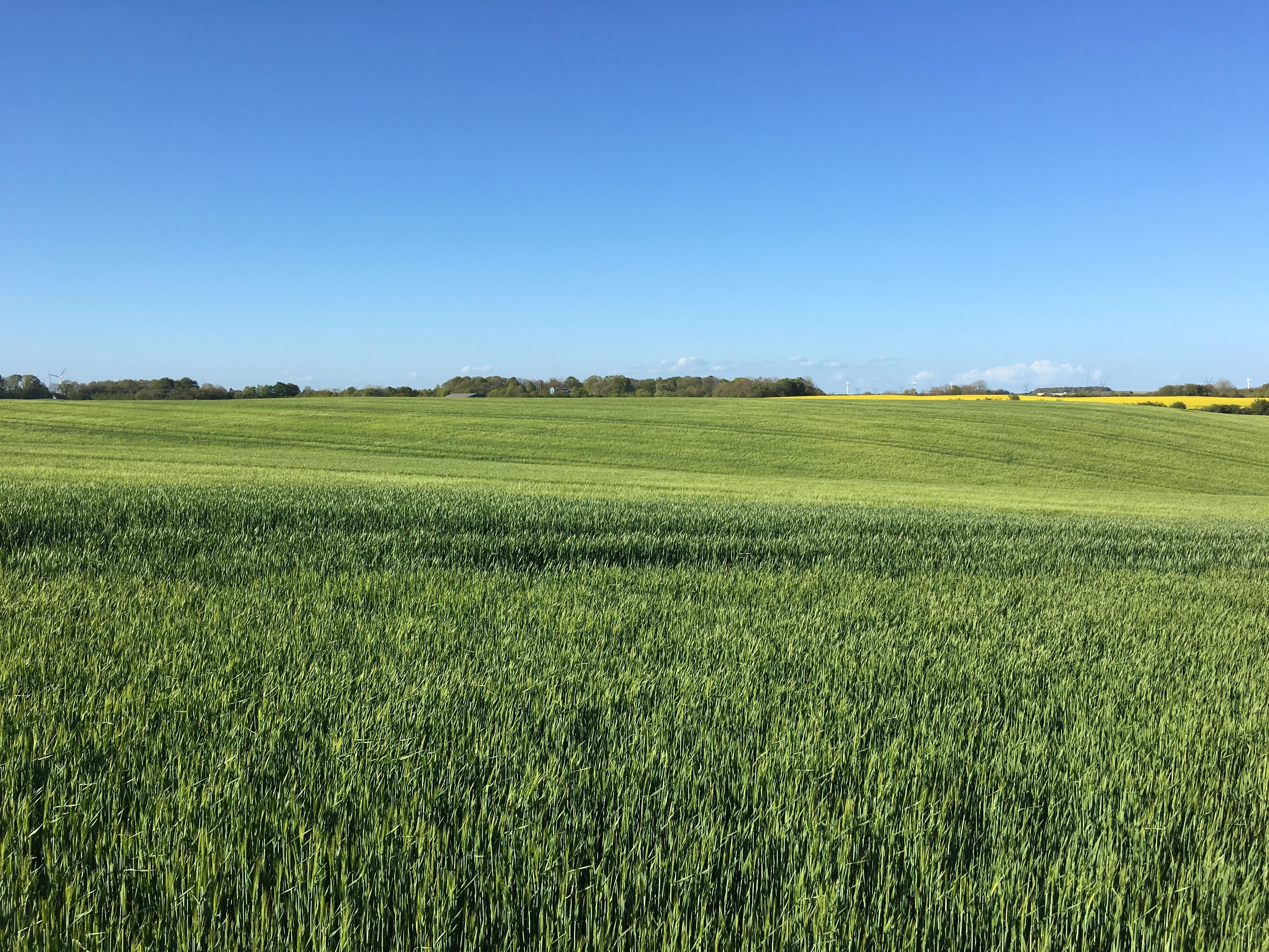 Plantebeskyttelse, Vintersæd, Græs & Efterafgrøder forår 2019